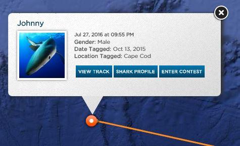 shark tracker apps
