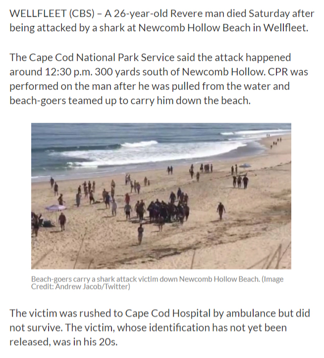 News, Information, Commentary and Entertainment about Sharks on Cape Cod